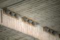 Belorítok ubúda, ich hniezda však nie sú ľuďom po vôli: Úžasné, ako to napravili Banskobystričania!