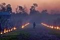Úrodu v sadoch v Bratislavskom kraji ohrozujú nočné mínusové teploty: Proti mrazu nasadili oheň a vrtuľníky