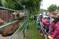 Košická ZOO zaznamenala rekordnú návštevnosť: Mláďatko, na ktoré čakali 28 rokov, chcú vidieť všetci!