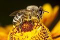 Devastujúce zistenie vedcov o včelách: Navonok nevinné pesticídy sú smrtiacou hrozbou