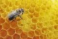 Čo nastane, keď vyhynú včely? Následky pre ľudí budú mimoriadne hrozivé