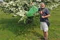 Na Slovensku sa objavil smrteľne nebezpečný chrobák: Človeka zabijú už 3 stotiny gramu jeho jedu