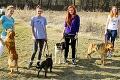 Zvolenčania si užili krásne počasie: Kočky prevetrali psíky z útulku