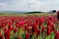 Slovenské polia pokryli elektrizujúce farby: Nádhera! Červenej záplave pri Sobotišti už konkurujú Voderady