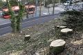 Výrub stromov v centre Bratislavy: Primátor ho označil za smutnú udalosť