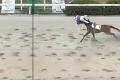 Kuriózny finiš dostihov: Džokej preletel cieľom skôr ako jeho kôň