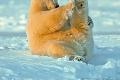 Medvedia inšpirácia pre zdravie: Hodina jogy smackom
