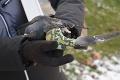 Útoky na zvieratá v Košiciach pokračujú, novým terčom sa stalo vtáctvo: Neznámy strelec vyčíňal na zaľudnenom sídlisku