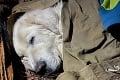 Dojímavá záchrana v Slovenskom raji: Vďaka pomoci turistov uvidel vysilený psík opäť svoju rodinu