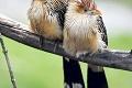 Noví obyvatelia košickej zoo: ZFrancúzska prileteli exotické operence
