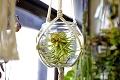 Aj nechcené rastlinky dostanú druhú šancu: Monika prišla so skvelým nápadom! Taký útulok ste ešte nevideli