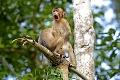 Comedy Wildlife Photo hľadá najvtipnejšiu fotku z divočiny: Dokážeš sa nezasmiať?