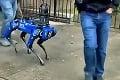 Majú špeciálneho pomocníka: Robotický pes sa stal novým členom polície! Stál pekný balík
