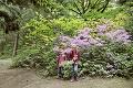 Nádhera v arboréte nad Zvolenom: Exotické rododendrony si dali kvôli chladnej jari načas
