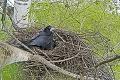 Trestuhodné konanie barbara pri Bratislave, usvedčil ho online prenos: Strieľal na chránené vtáky Rakúšan?!