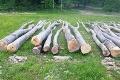V Pčolinom vyrúbali bez povolenia takmer 150 stromov: Aký hrozí páchateľovi trest?