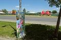 Kuriózny problém v Dunajskej Lužnej, domáci sa búria: Prečo sú pri hlavnej ceste slony?!