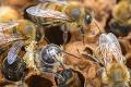 V najvyššie položenej včelnici na Slovensku je rušno: Obyvateľky úľov vylietavajú už štvrtú sezónu!
