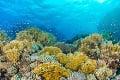 UNESCO chce zaradiť Veľkú koralovú bariéru medzi ohrozené lokality: Rázna reakcia Austrálie