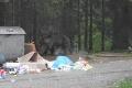Správa TANAP-u karhá ľudí: Prečítate si, čo robili pri plašení medveďa, budete sa chytať za hlavu