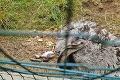 Šokujúci zážitok Daniela z bojnickej zoo: Čerstvo vyliahnutý nandu ležal na daždi, nikto mu nepomohol!