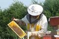Skúsený včelár Tibor Vargapál hlási problémy: Prírodná viagra nebude!
