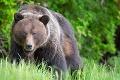 Za rodinnými domami na Liptove videli medveďa: Zásahový tím vyzval ľudí k opatrnosti
