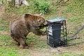 Nečakaný výsledok tradičného zápasu v košickej zoo: Ako si poradil maco so zabezpečeným kontajnerom?