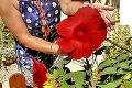 Nadšená pestovateľka Zita: V záhrade jej vyrástli rekordné kúsky! Tajomstvo mojich megakvetín