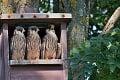 Pre nás divadlo, pre nich najťažšie obdobie v živote: Prečo sa tohto roku odchod vtákov oneskoril?