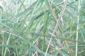 Hubárska sezóna ešte nekončí! Alenine úlovky vylákajú do lesa aj vás