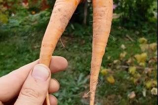 Rudolfa prekvapilo, čo vykopal na záhradke.