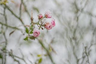 Bratislavčania sa ráno tešili zo snehu.