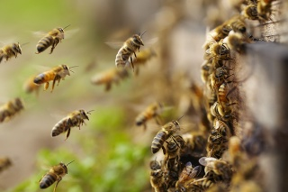 close up of honey bees flying