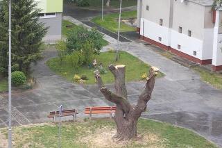 Piešťančana nahneval pohľad na vypílený strom.