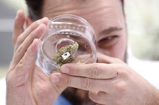 Obchod s marihuanou ide po jej legalizácii v Kanade na dračku.