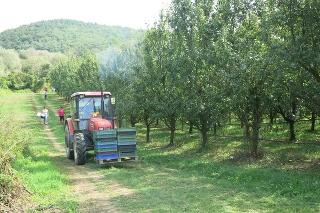 Farmári zo Sedlísk (okr. Vranov nad Topľou) sa tešia z bohatej úrody.