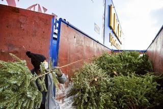 1. Stromčeky zbierali do kontajnera počas dvoch januárových týždňov.