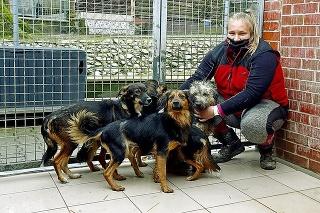 Zvyšní psíkovia sa už čoskoro dostanú z bratislavského útulku do nových domovov.