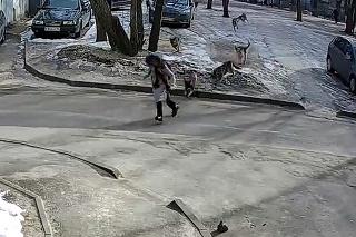 Desivý pohľad na ustráchané dievčatko: Naháňala ju svorka psov, utiecť bolo takmer nemožné