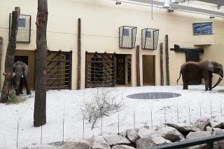 Národnú zoologickú záhradu v Bojniciach môžu navštíviť ľudia i v tomto zimnom období.