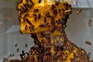 Takto na soche pracovali usilovné včely.