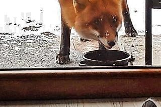 Návštevníčka je veľká maškrtnica a niekedy si odnesie aj misku.