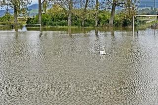 Labuť: Nová obyvateľka ihriska  si nevšedné jazero užíva, obyvatelia sú ale nešťastní.