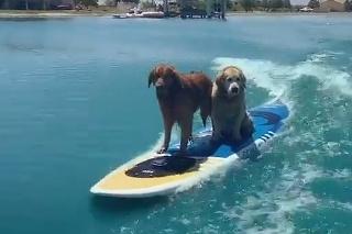 Títo psíkovia majú o letnú zábavu postarané: Jedinečný pohľad na štvornohých surferov