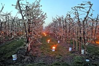 Na ploche 5 hektárov pozapaľovali až 1 300 sviečok.