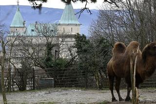 Národná zoo zaznamenala počas viac ako dvojmesačného obdobia, keď boli jej priestory zatvorené, i niekoľko noviniek.