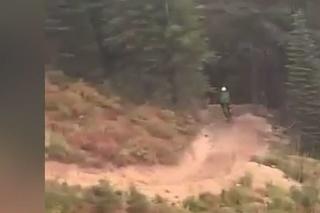 Cyklista prežil nočnú moru: V lese ho naháňal medveď, zúfalý útek na dvoch kolesách