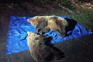 Zastrelená medvedica s mláďaťom pri ceste.