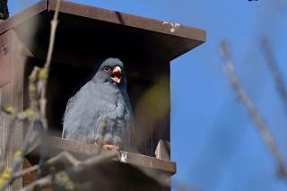 Ornitológovia ich